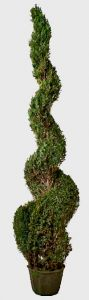 Preserved Classic Spiral Topiary 108 inch in Juniper Foliage
